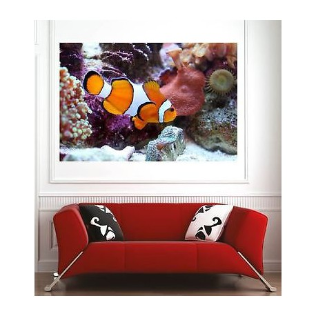 affiche poster d coration murale poisson clown r f 60943357 6 dimensions stickers muraux deco. Black Bedroom Furniture Sets. Home Design Ideas