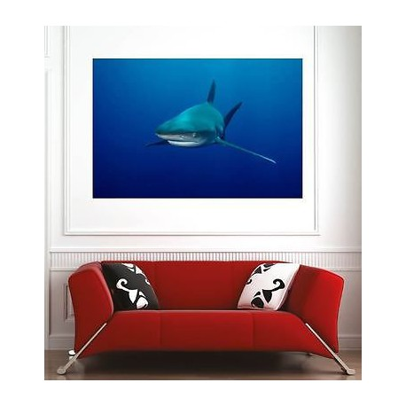 affiche poster d coration murale shark r f 2721708 6 dimensions stickers muraux deco. Black Bedroom Furniture Sets. Home Design Ideas