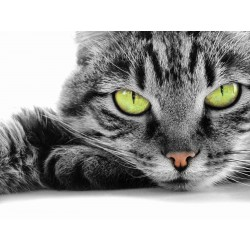 Stickers autocollant ou Affiche poster Beaux Chat Au Grand Yeux Vert AN_00038