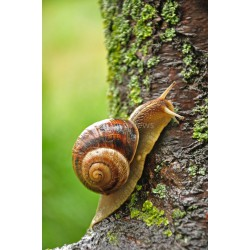 Stickers autocollant ou Affiche poster Beaux L'escargot Margot AN_00039