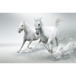 Stickers autocollant ou Affiche poster Chevaux Blanc AN_00078