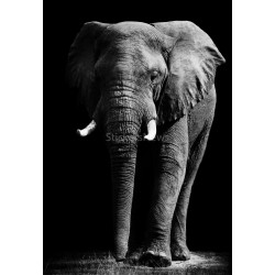 Stickers autocollant ou Affiche poster Elephant AN_00091