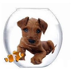 Sticker trompe l'oeil animal Chiot bocale 30x30cm